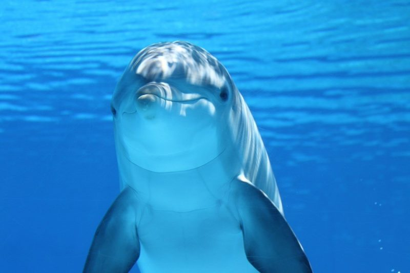 Whales and dolphins live 'human-like' lives Dolphin-e1508278778603