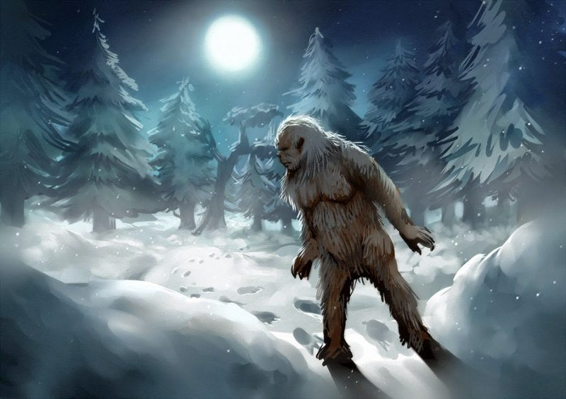 Yetis? Nope. DNA study says bears