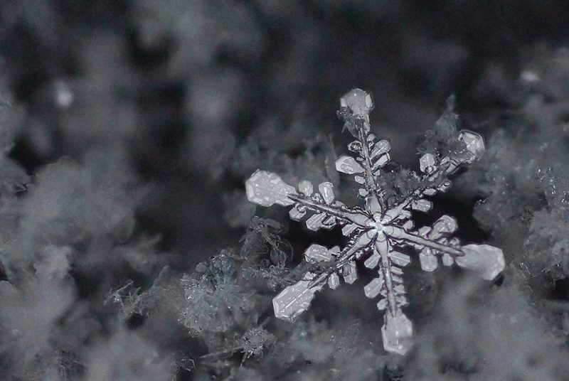 black-and-white snowflake with hexagons on the end of its arms.
