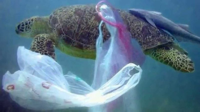 Ocean Plastic Killing Marine Turtles Earth Earthsky