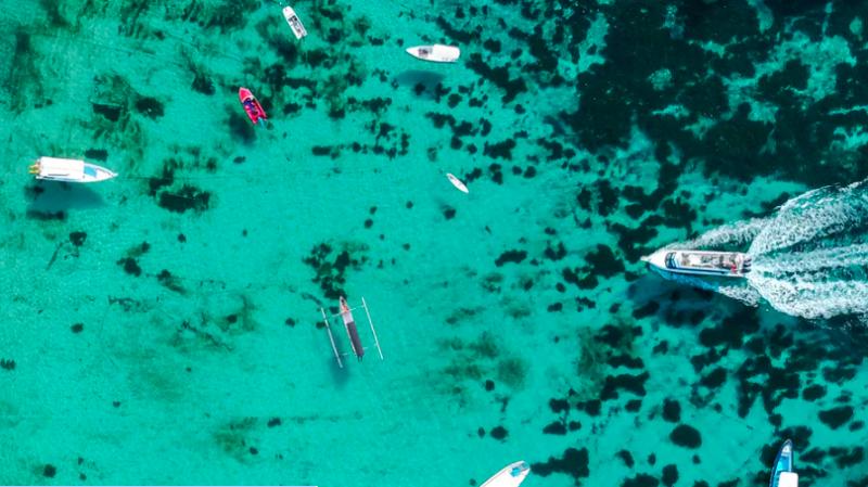 Underwater noise pollution stresses aquatic animals | Earth