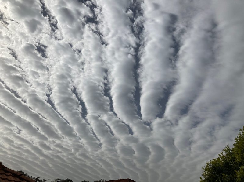 Long parallel stripes of clouds covering nearly all the sky, seen from below.