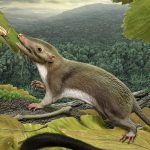 What we inherited from bug-eating mammal ancestors