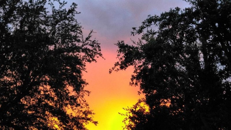 Dark trees on each side, colors from yellow to orange, lavender to blue in the sky.