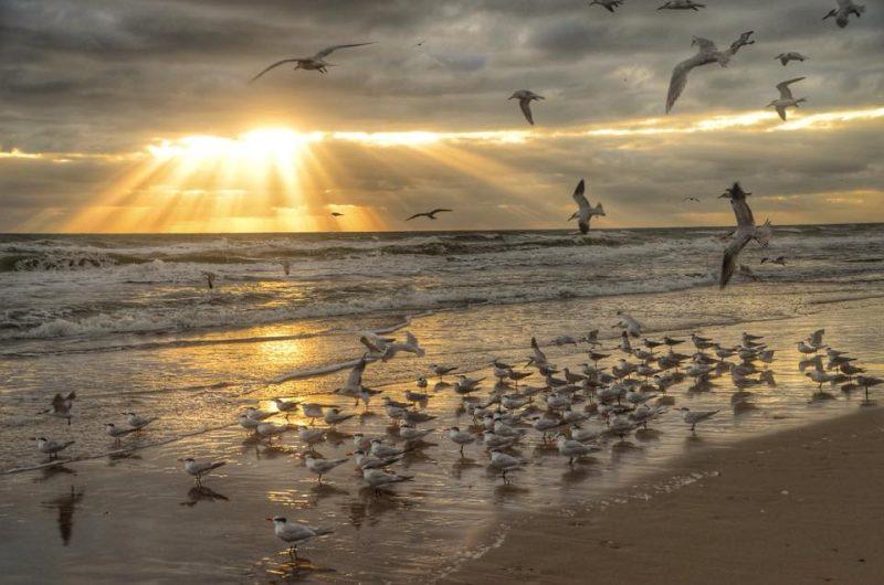 Sunbeams hitting a beach with seagulls.