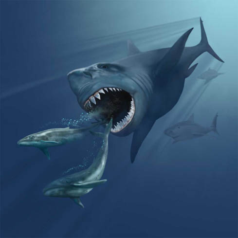 We Promise You Won T Be Eaten By A Megalodon Earth Earthsky