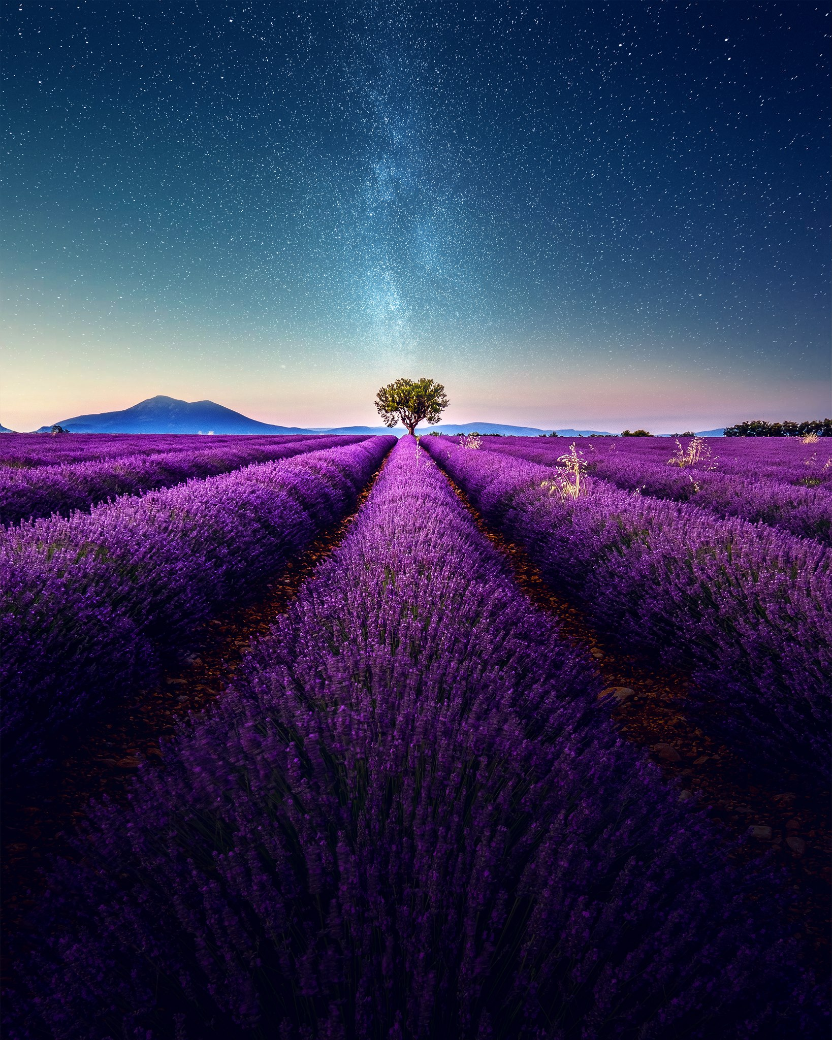Lavender Fields France Map.Lavender Field Under The Milky Way Today S Image Earthsky