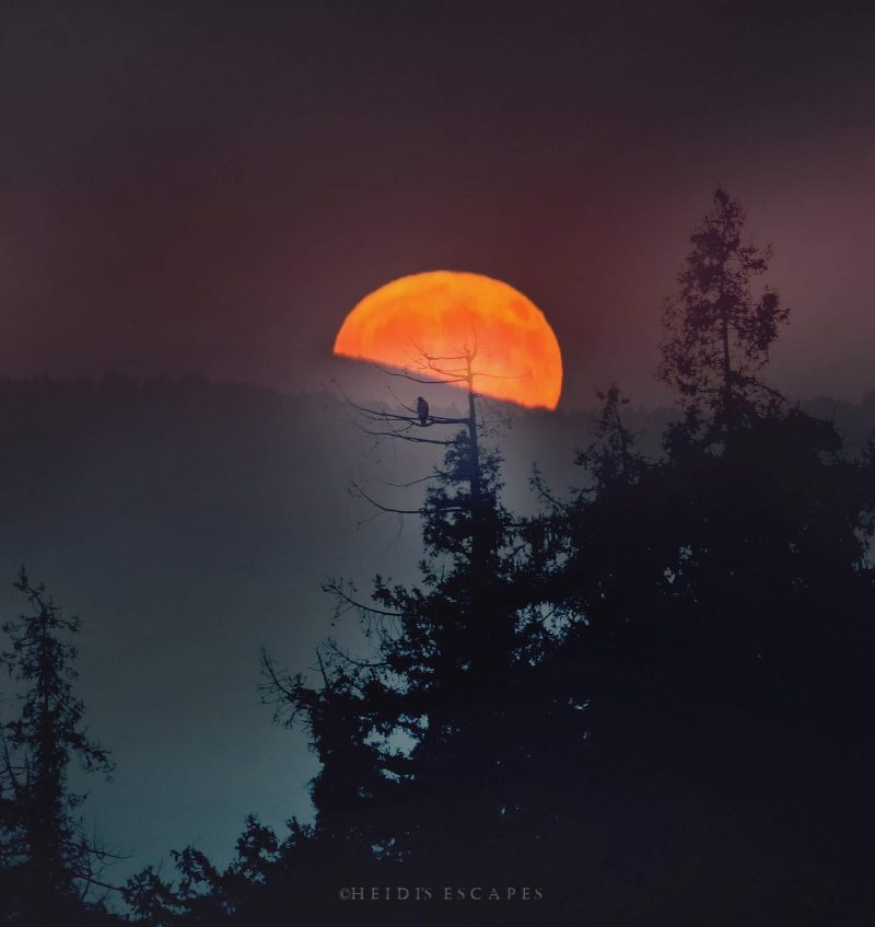 Large orange moon rising behind a mountain ridge with owl on tree in foreground.