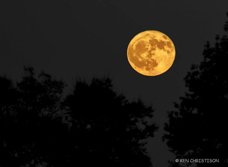 Large yellow-orange full moon over silhouetted trees.