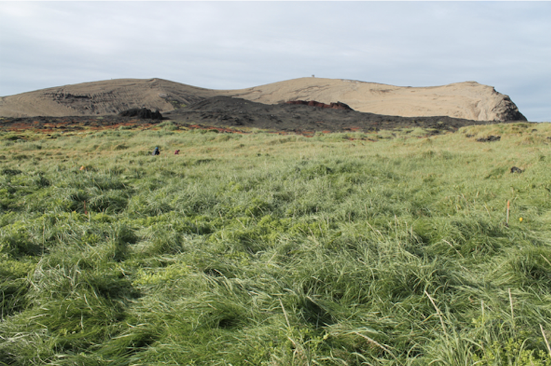 A field of green grasses with mostly bare hills in the background.