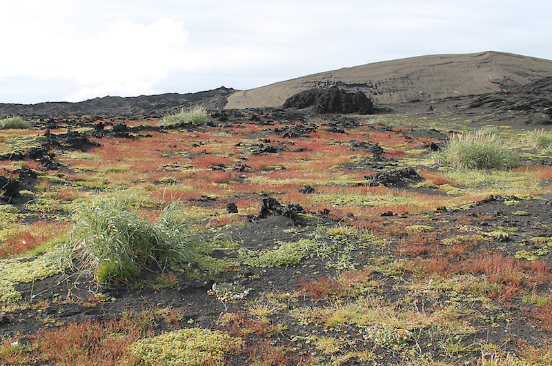 In the foreground, a flat surface largely covered in short green and red vegetation, with a few clumps of taller grass. In the background, dark brown bare hills and ridges.