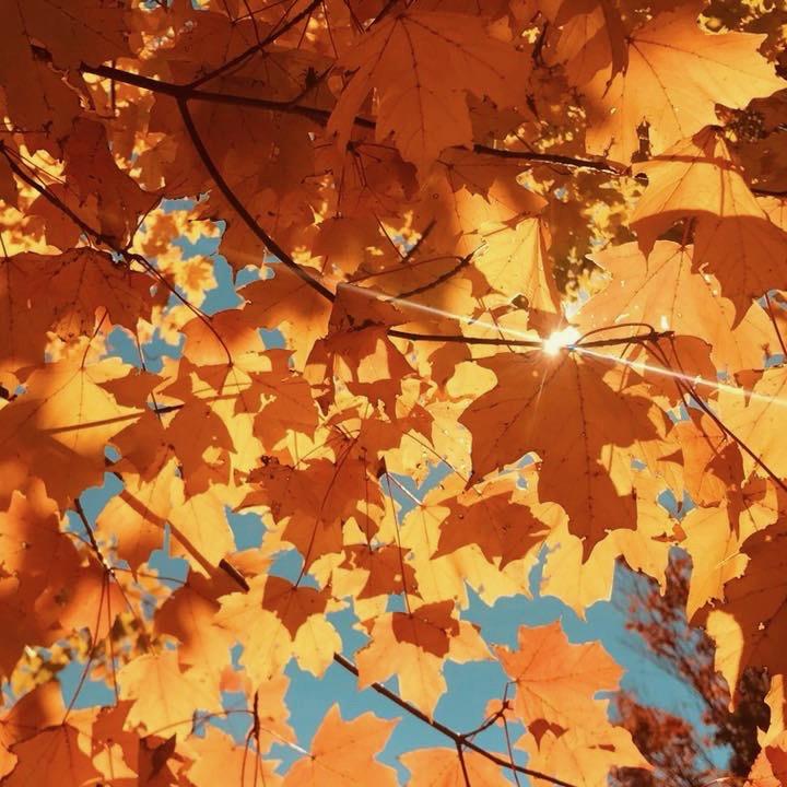 Sunburst on a fall morning