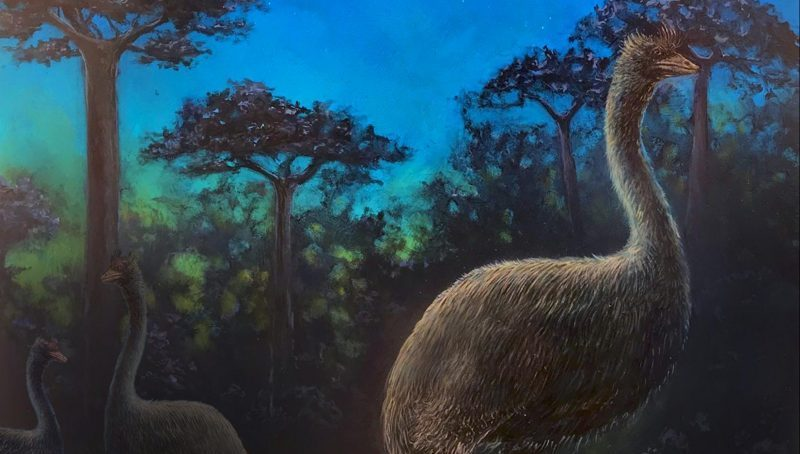 This giant flightless bird was nocturnal, possibly blind