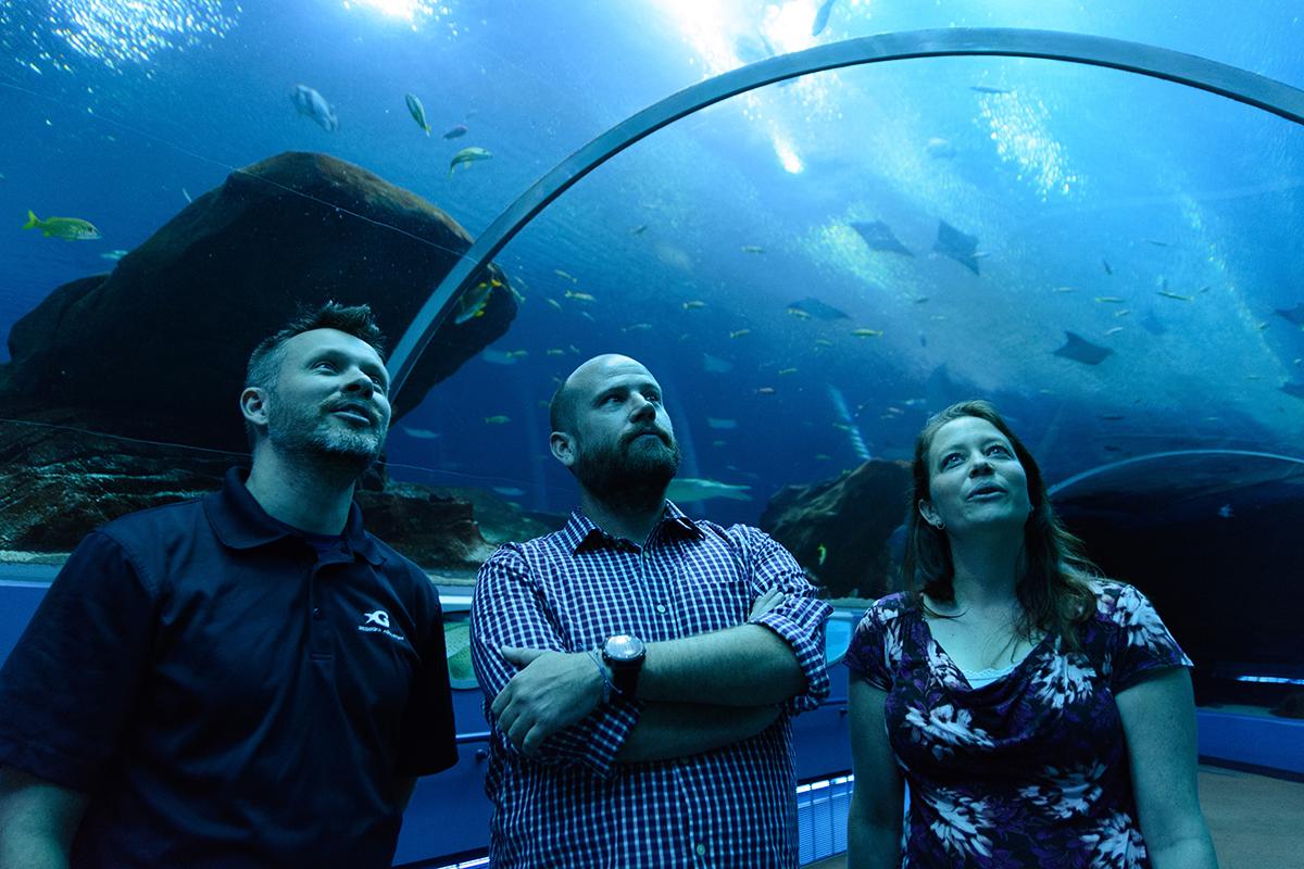 Largest U.S. indoor ocean exhibit has good news   Earth ...