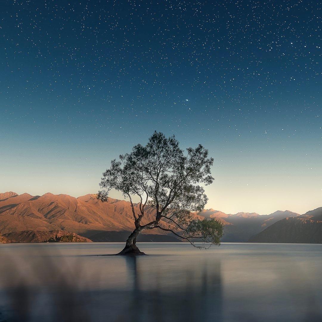 Lone Wanaka Tree in New Zealand | Today's Image | EarthSky