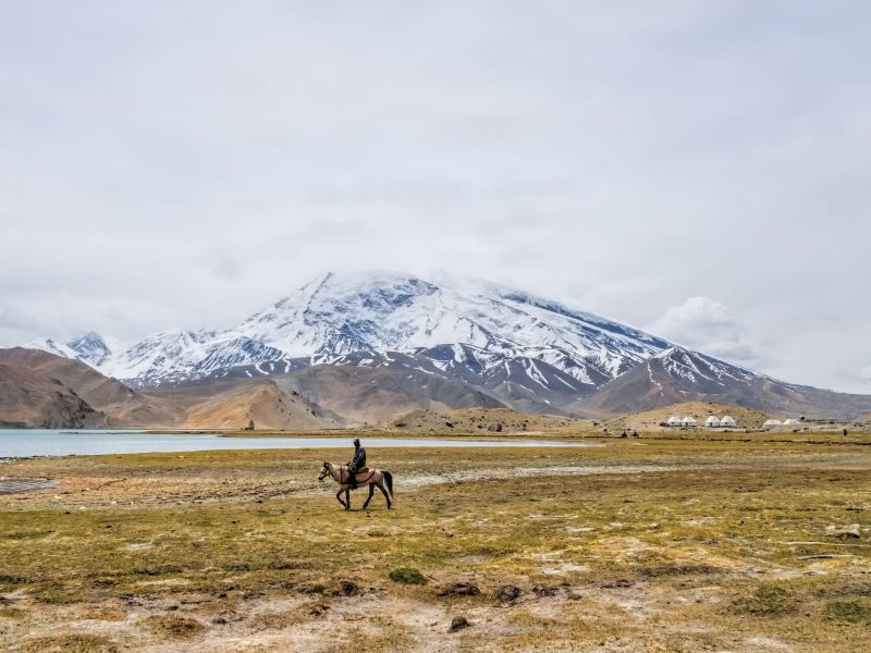 Horseback rider crosses a yellow plain, in front of a snow-covered mountain .