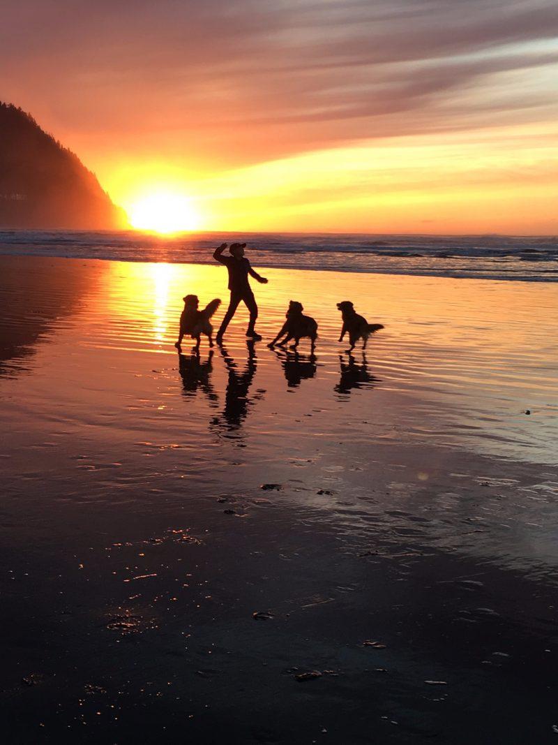 Silhouettes of a man with his arm raised to throw, and 3 golden retrievers, on a beach against a yellow-orange sunset background.