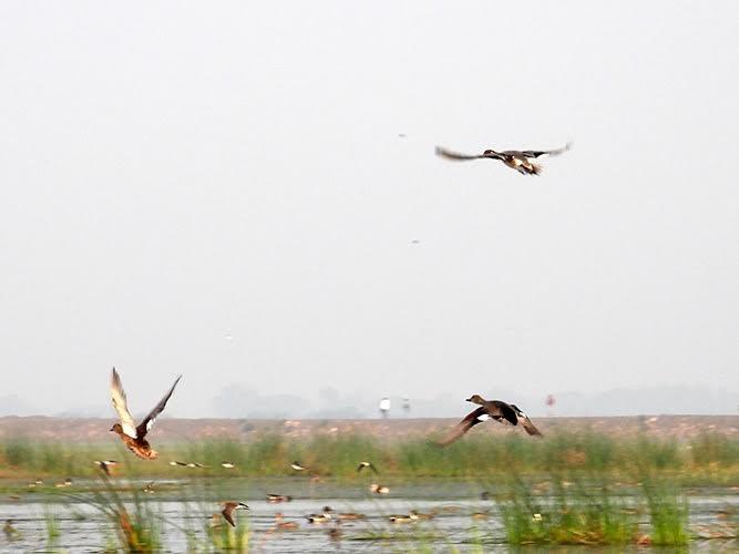 Birds flying over a marshland