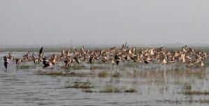 A flock of birds flying above a marshland.