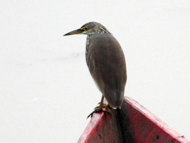 A bird perched on the bow of a boat