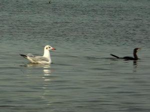 A bird swimming