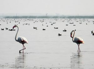 Tall birds with long curved necks, in shallow water