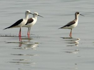 Birds standing in shallow water