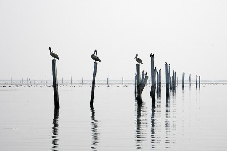 Poles extending from a lake, and on each pole there sits a bird.