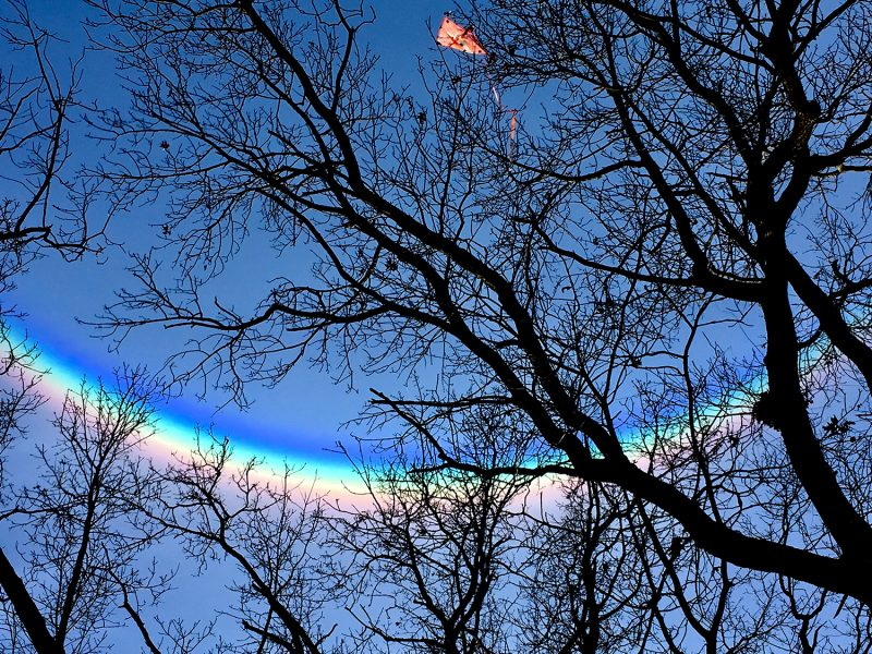 A rainbow-like arc in the sky, with red on the bottom of the arc, behind a tree.