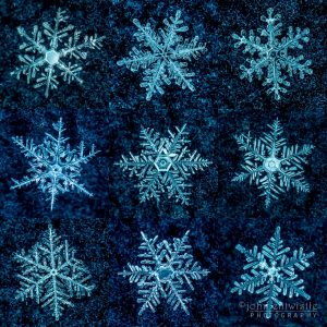 Nine star-shaped snowflakes on a blue background.
