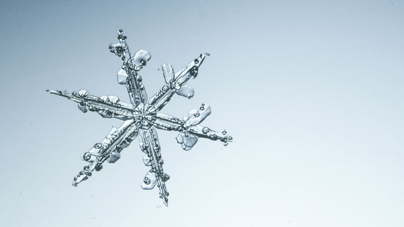 Long-armed feathery snowflake.