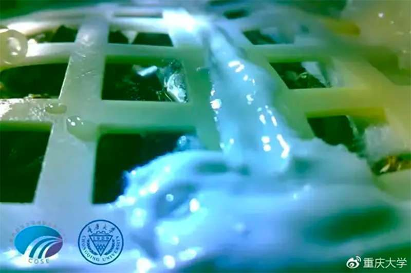 Plastic grid with close-up of sprouted seed.