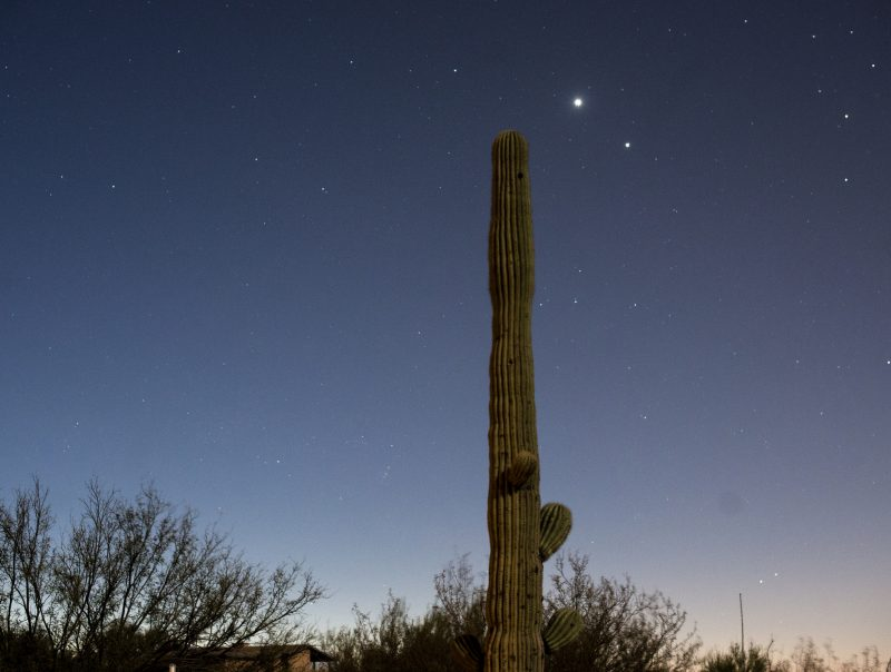 Large saguaro cactus in foreground, with 2 bright dots - Venus and Jupiter - behind.
