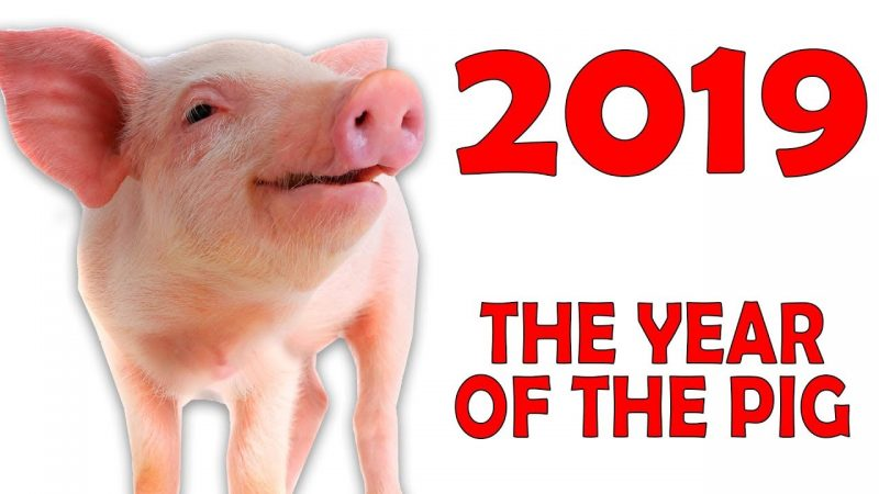 Composite image showing a baby pig next to '2019 the year of the pig'.