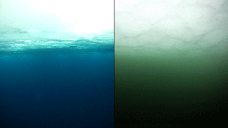 Left: clear blue water. Right: murky green water.