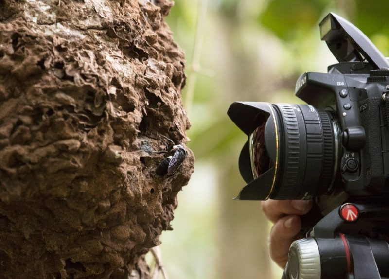 Camera aimed at a dried mud or chewed wood nest with a hole in it.