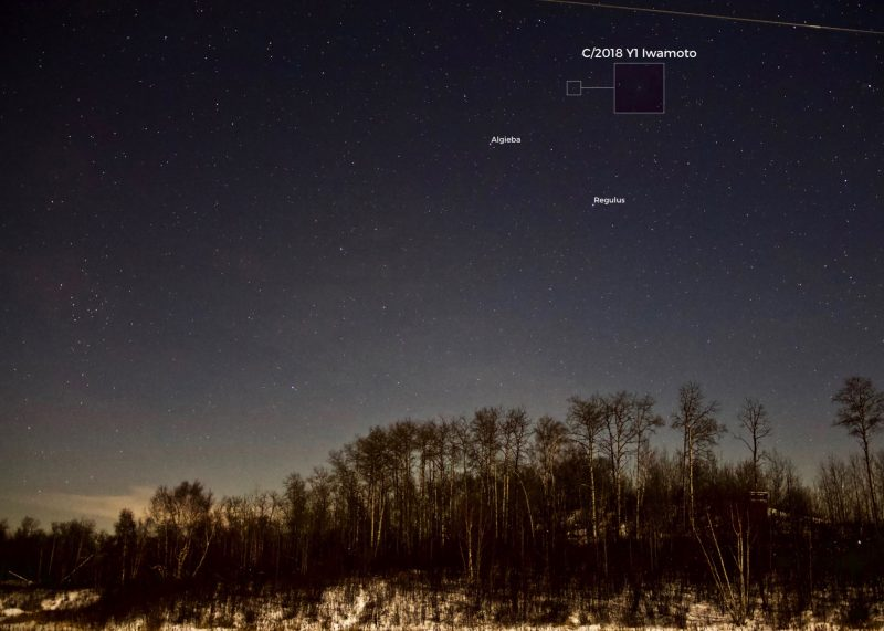 A nightscape showing trees, with a starry sky and the comet marked, above.