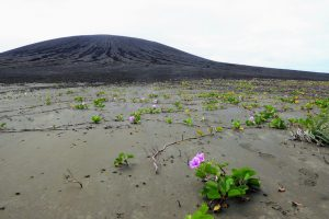 A few pink flowers blooming in a large area of brown mud.