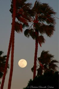Full moon behind palm trees.