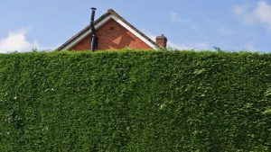Horizontal leafy hedge in front of a house.