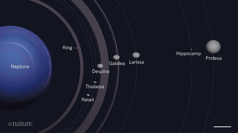 Planet Neptune to left, orbits with different-sized moons on right.