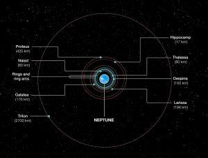 Orbits of Neptune's inner moons.