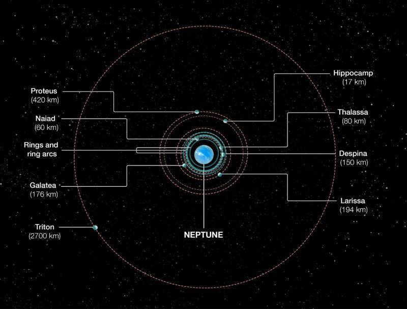 Diagram of orbits of Neptune's inner moons plus large orbit.