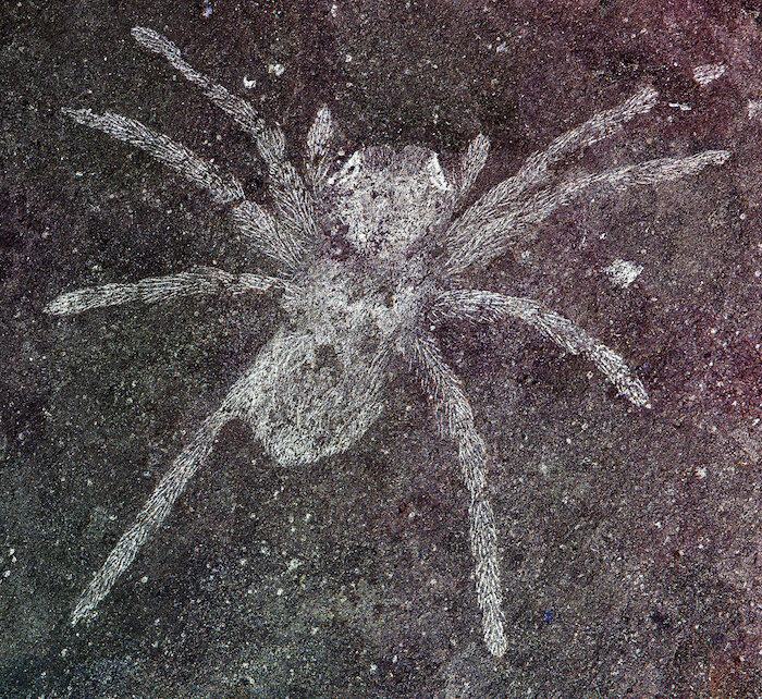 How many legs do spiders have