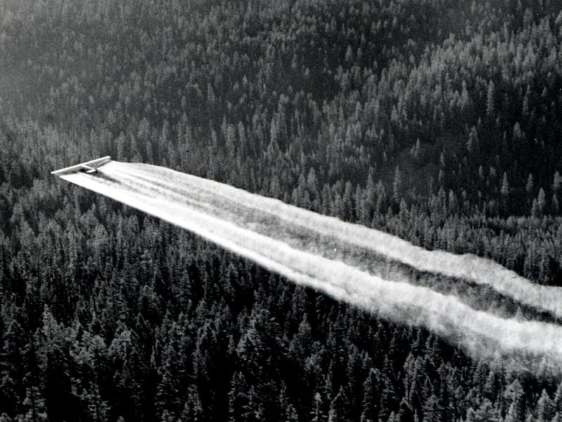 Huge white streaks of smoke behind an airplane flying low over a dense forest.