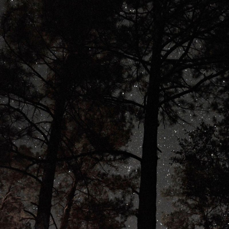 Tall pine tree silhouettes, with many bright stars shining behind.