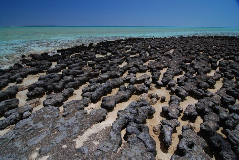 Large round cushion-shaped black rocks.