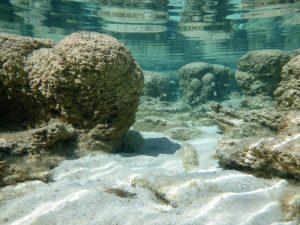 Underwater scene with round bumpy rocks.