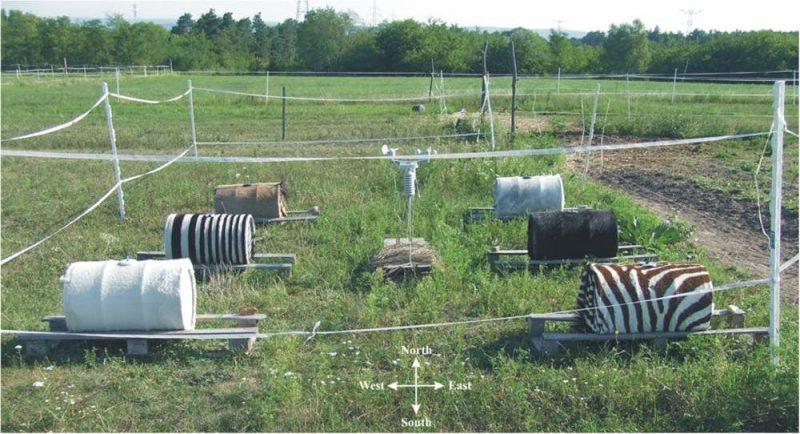 Six barrels, black, white, plain black and white stripes, zebra stripes.