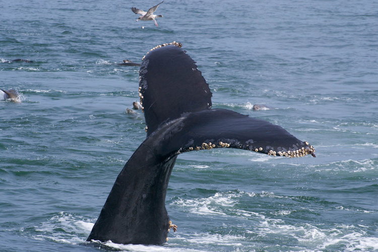 Whale tail emerging from water.